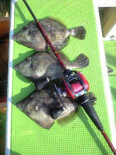 今日はカワハギ釣り?